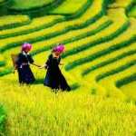 sapa rice terrace vietnam package holiday