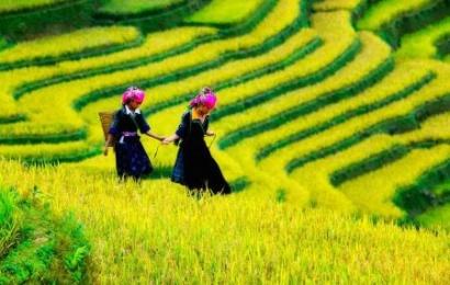 sapa rice terrace vietnam package holiday