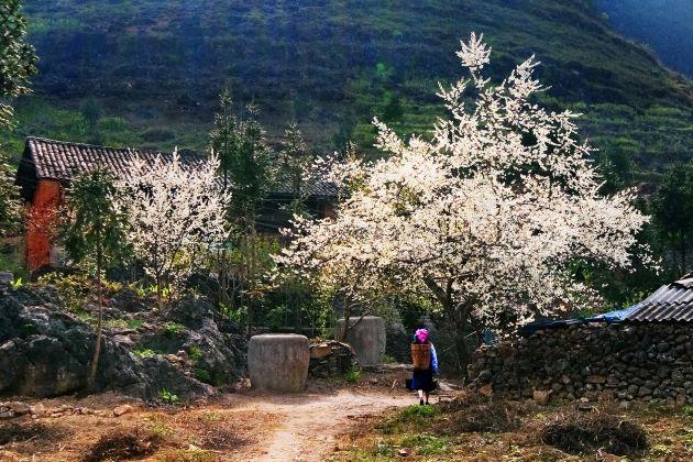 visit a sapa village