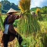 Mai Chau Valley in Holiday Package to Vietnam